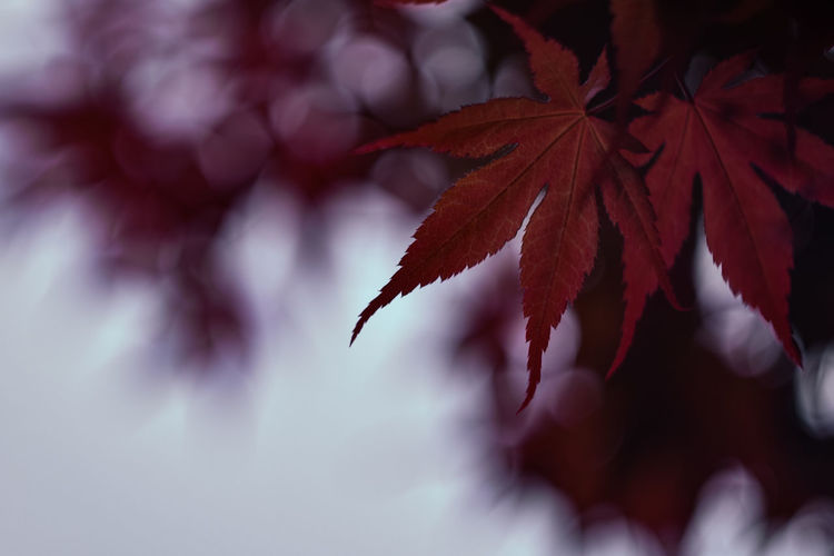 Exceptional Photographs Silhouette EyeEm Nature Lover Poland Bokehlicious Bokeh Lights Bokeh Love Minimal Fragility Red Leaf Close-up The Minimalist - 2019 EyeEm Awards