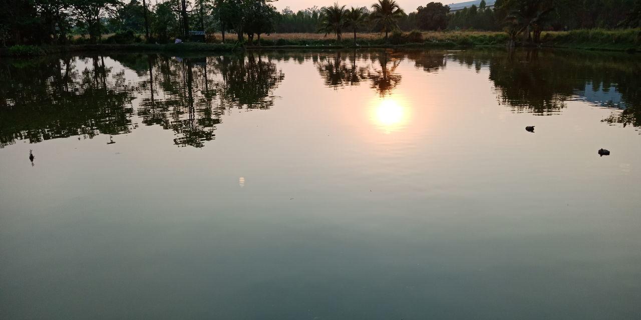 Water Tree Bird Lake Reflection Silhouette Sky