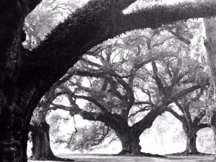Natureure #Tree]Beautiful] Gilroyca CaleroDam Iphonephotography NatureLover
