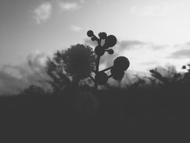 Flower Flowers Nature Photography Flowerporn Blackandwhite Black And White Black & White Shadow Shillouette EyeEm Nature Lover