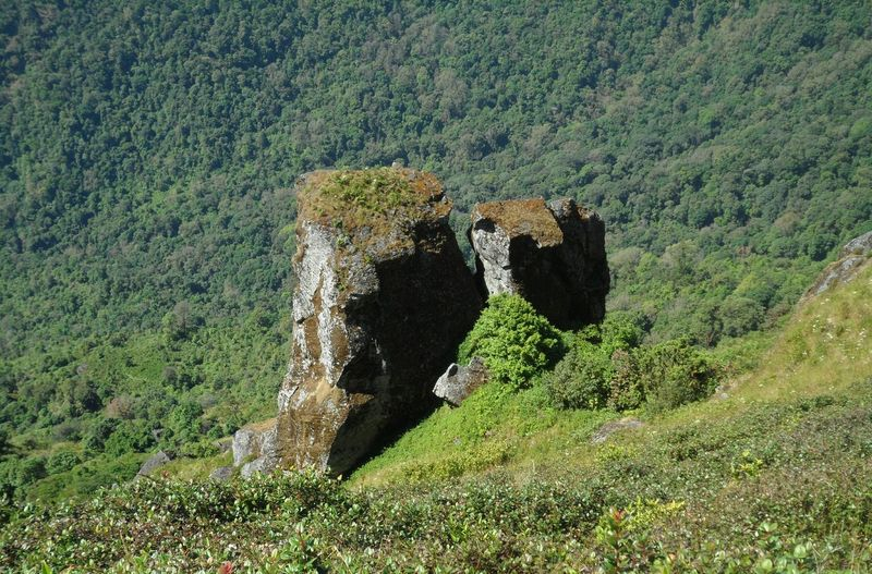 กิ่วแม่ปาน(ยอดดอยอินทนนท์) Green Color Nature Field Grass Day High Angle View Mountain Beauty In Nature Growth Outdoors Landscape No People Tree
