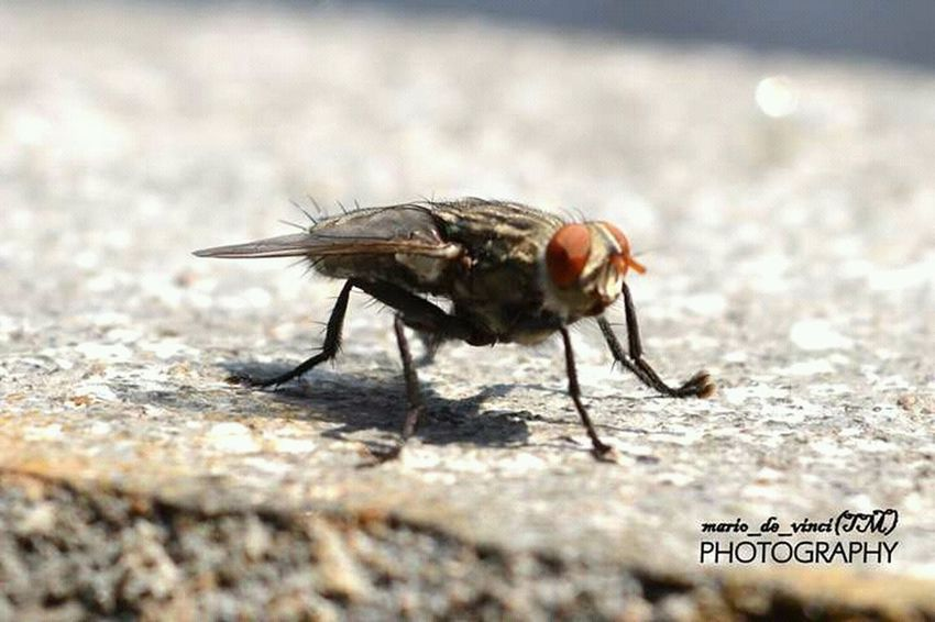 Eega Micro Photography House Fly Small Creature Nature_collection Taking Photos Naturelovers Insect Photography Insect Microphotography