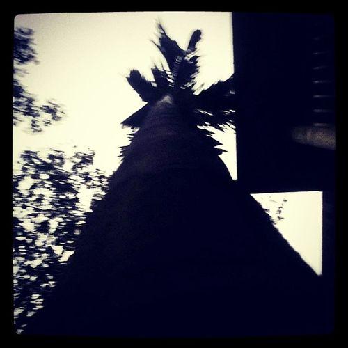 A tree...-_-