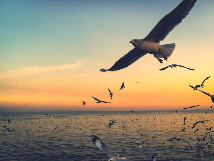 motion of bird flying Flying Bird Animals In The Wild Animal Themes Spread Wings Sunset Nature Animal Wildlife Seagull Sea Sky Motion No People Outdoors EyeEmNewHere