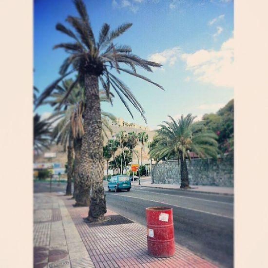 PaseoDeChil Paseo Chil LasPalmas LasPalmasDeGranCanaria LPGC GranCanaria IslasCanarias CanaryIslands Canarias Canarios5Estrellas CanariasViva Palmeras Palmtrees Street Calle Cars Coches IgersLasPalmas Igers IgersOfTheDay IgersLpa IgersCanarias BestOfTheDay PicOfTheDay PhotoOfTheDay FotoDelDía