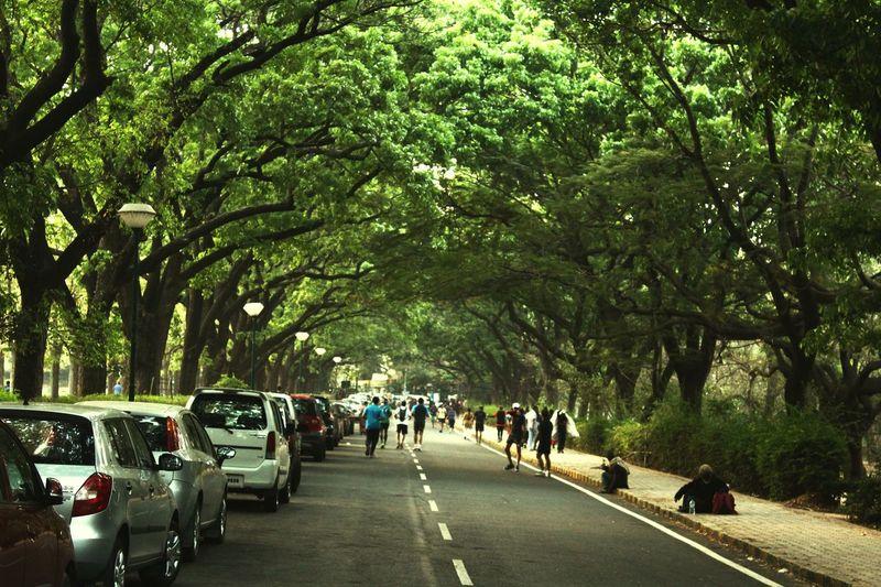 Sunday Morning Walk In Cubbon Park