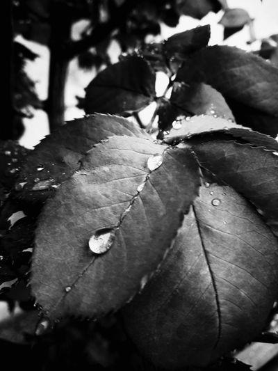 Leaf Autumn Close-up Plant