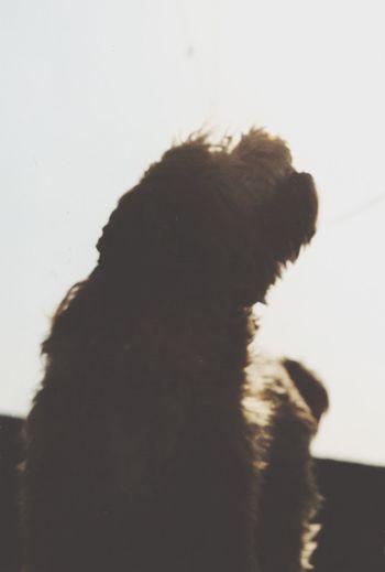 Dog Lover Dog Life I Love My Dog jables 👌🏽 First Eyeem Photo