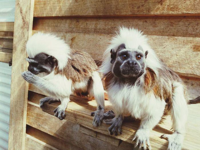 Close-up Cute Animal Monkey Business Monkeys Symbio Zoo