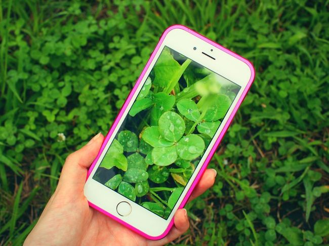 四つ葉 四つ葉のクローバー Clover Green Natural Nature On Your Doorstep Drop 雫 水滴