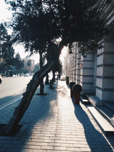 Tree The Way Forward Shadow Sunlight Building Exterior City Built Structure Architecture Baku No Peopleijan] Outdoors no peopleDayyPavementtNaturee