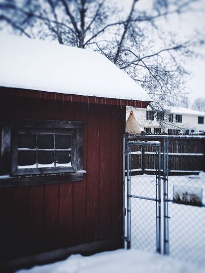 Backyard Chicken observing the Snowfall, while undercover IPhoneography IPhone Photography Iphone6splus Camerabag2 Spring Snow Day Backyard Chickens