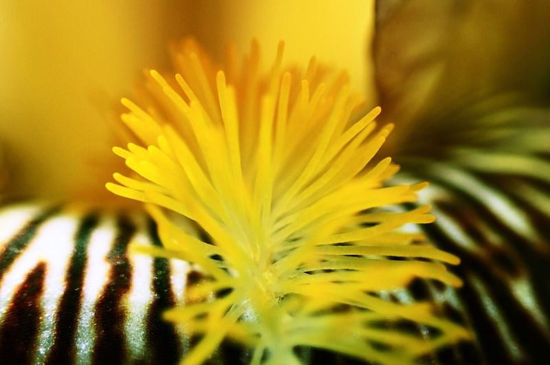 Flower Nature Yellow Beauty In Nature Close-up Selective Focus No People Plant Day Outdoors Flower Head SuperMacro Macro Photography