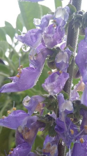 Flower Nature Purple Beauty In Nature Freshness Fragility Plant Day Close-up Flower Head Meu Jardim Beauty In Nature
