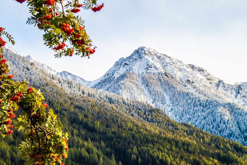 Beauty In Nature Cold Temperature Day Flower Flowering Plant Freshness Fruit Growth Landscape Mountain Nature No People Outdoors Plant Scenics - Nature Sky Snow Tranquil Scene Tranquility Tree Winter