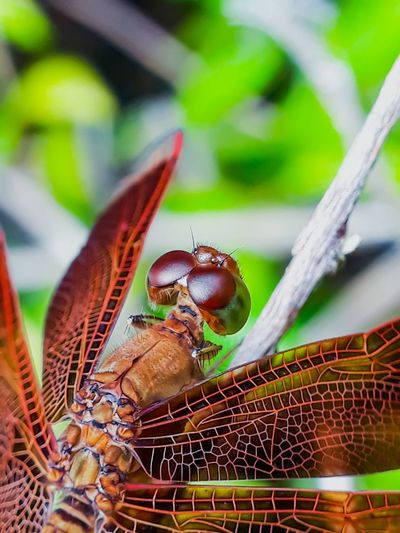 the dragon that fly Stereo Insect Leaf Animal Themes Close-up Dragonfly Fly HEAD Animal Eye Magnification