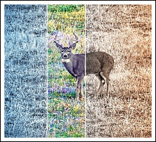 Animal Themes One Animal No People Outdoors Animal Nature Mammal Day Animal Wildlife Worland Worland WY Wyoming Mule Deer Deer Filtered Image