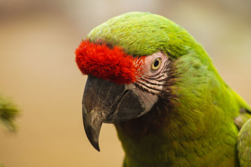 Portrait of a bird Bird One Animal Animal Themes Animal Parrot Animal Wildlife Vertebrate Animals In The Wild Close-up Focus On Foreground Animal Body Part Day Beak Macaw Nature Portrait Animal Head  No People Multi Colored Outdoors Profile View Animal Eye