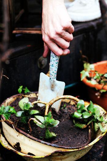 Peron gardening with gardening tool
