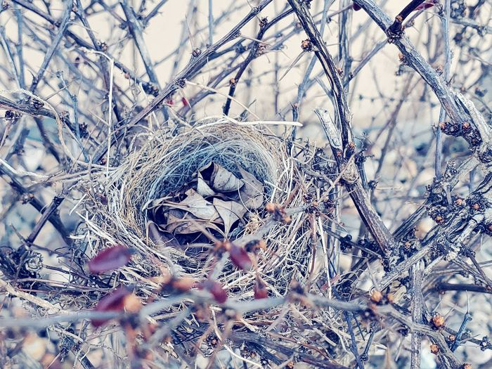 Close-up of bird nest on snow covered land