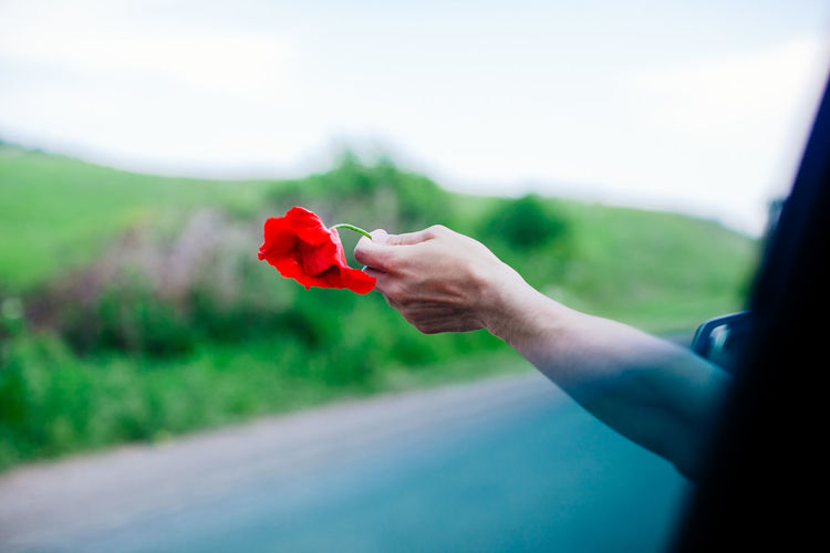 Man holding a red poppy out of the window Flowers Hand Holding Moving Nature Plant Poppy Red Roadtrip Wind Fresh On Market 2017