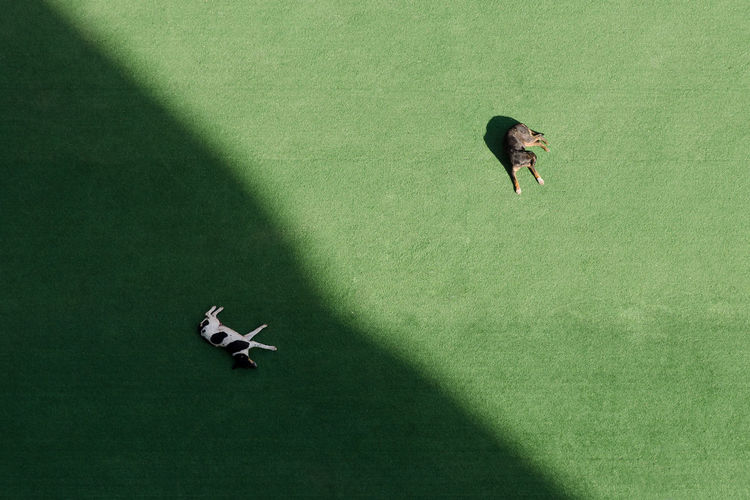 High angle view of women standing on green leaf