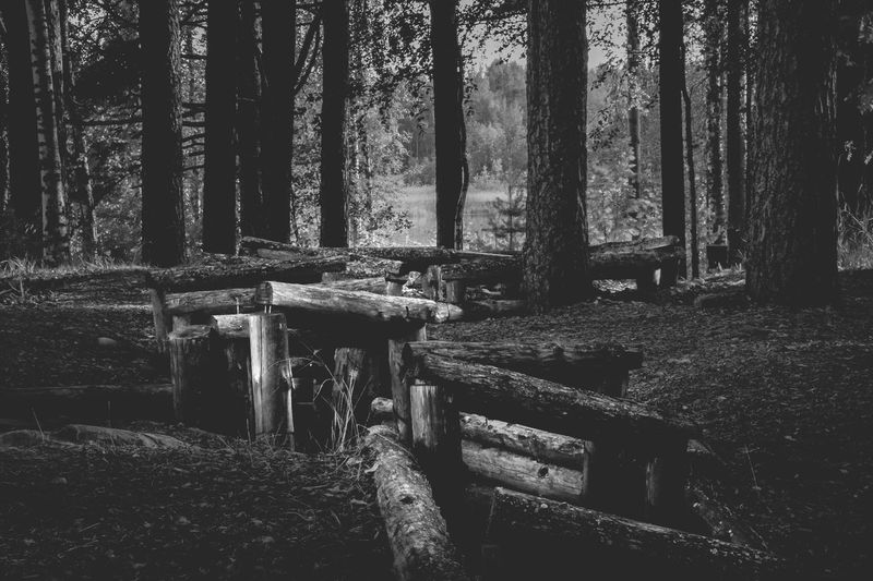 Winter war Trincheras Blackandwhite Winterwar War Tree Plant Forest Trunk Land No People Nature Architecture Beauty In Nature Tranquil Scene Sunlight Built Structure Day Tree Trunk Growth Tranquility Outdoors Seat Bench WoodLand