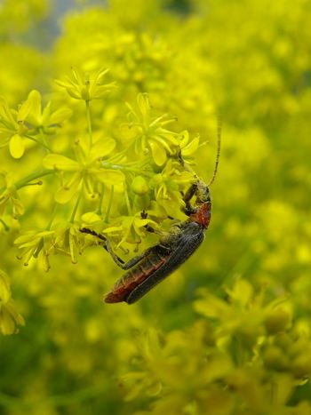 Insect Animals In The Wild Animal Themes Animal Wildlife One Animal No People Close-up Nature Reserve Bug Käfer Bugslife Bugs Käfer Auf Pflanze Beauty In Nature Green Color Plant Nature Gelb Gelbe Blüten🌾 Wanderlust Tranquility Perspective Pollen Pollenation Green Color Paint The Town Yellow