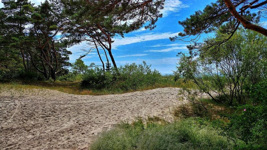 Shore of Baltic sea near Palanga, Lithuania. Lithuania Palanga Baltic Sea July2018 Lgg6 Summer Vacations Travel Lt Nature Romantic Sky Tree Water Sunlight Sky Close-up Shore Calm Sandy Beach Ocean Cloud Sand Tranquility