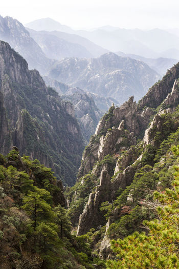 Yellow mountains in China Adventure Beauty In Nature China Day Forest Freshness Hiking Landscape Mountain Mountain Range Nature No People Outdoors Pine Wood Scenics Sky Tree Valley Yellow Mountain