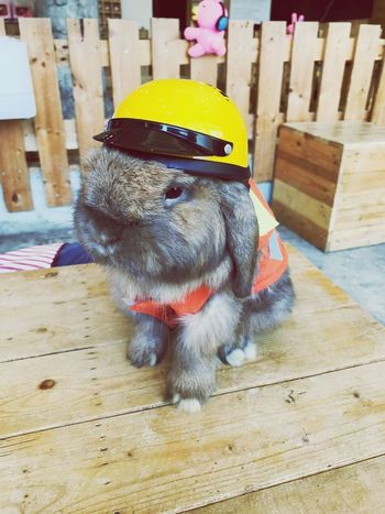 Rabbit motorbike Style One Animal Pets Animal Themes Wood - Material Indoors  Domestic Animals Mammal Pet Clothing Dog No People Close-up Day