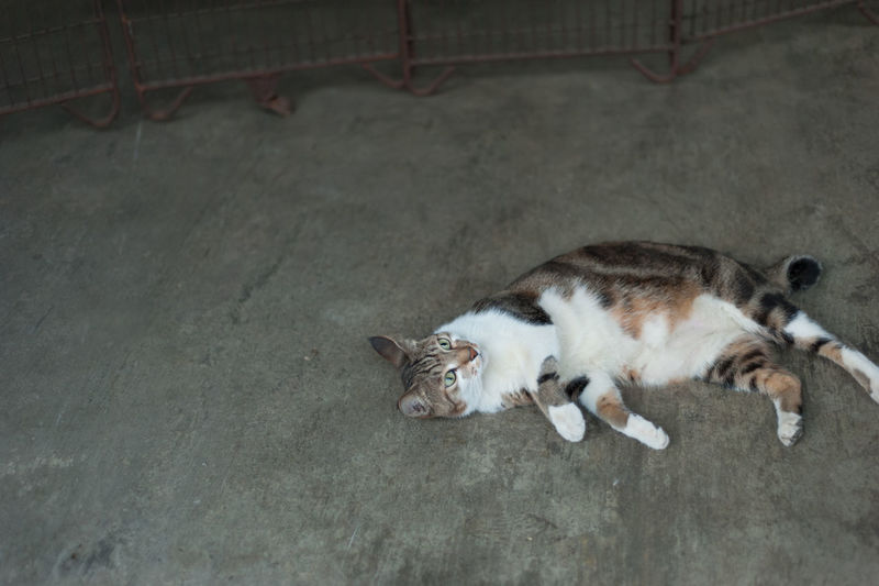 High angle view of cat lying on floor