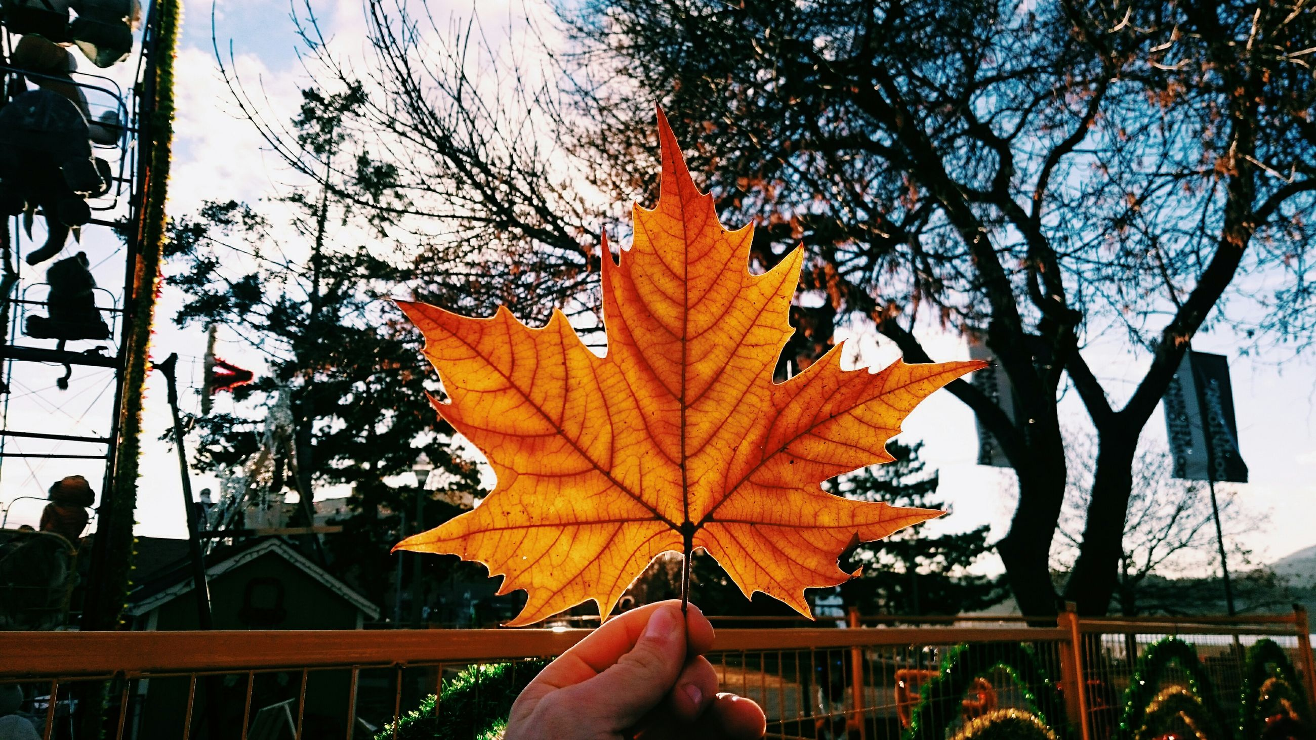 autumn, leaf, change, person, season, personal perspective, part of, unrecognizable person, orange color, maple leaf, cropped, leaves, tree, leaf vein, dry, holding, nature
