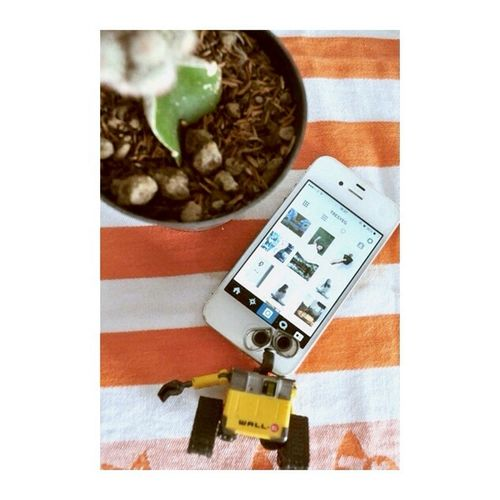 Instagram @tresyeg Instagram Wall-e Cactus