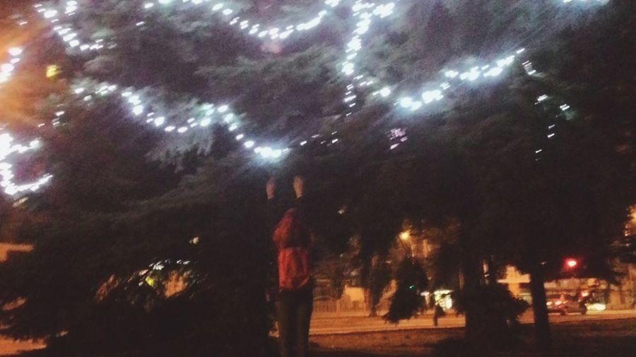 Дотянуться до звезд Illuminated Night Outdoors Celebration Tree City Sky Real People Firework Display Firework