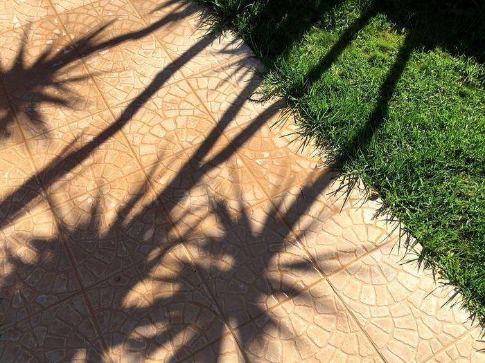 Picante Shadow Shadows Plant Grass Minimalism Minimal Colors Summer Summer Views Holidays Holiday Open Edit