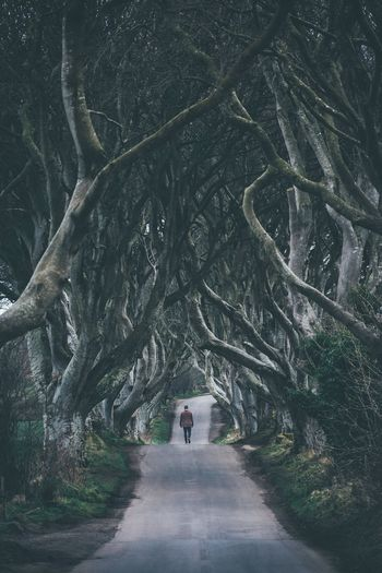 Back from Ireland, first stop dark hedges. Full Length One Person Tree Real People Nature Outdoors Day Winter Scenics Branch Beauty In Nature People Ireland The Dark Hedges