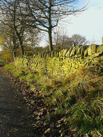 Drystonewalls Wall - Building Feature Outdoors Autumnleaves Tranquil Scene Shadow Pathways Tree Autumnbeauty Autumn Leaves Valleys Green Color Autumn Leaves Branch Sunlight Landscape Low Angle View Grass Lush - Description Change No People Day Scenics Tranquility