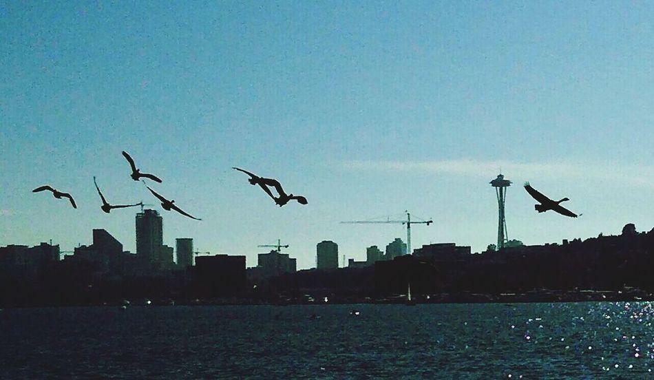 Seattle Spaceneedle Lake Union Canadian Geese