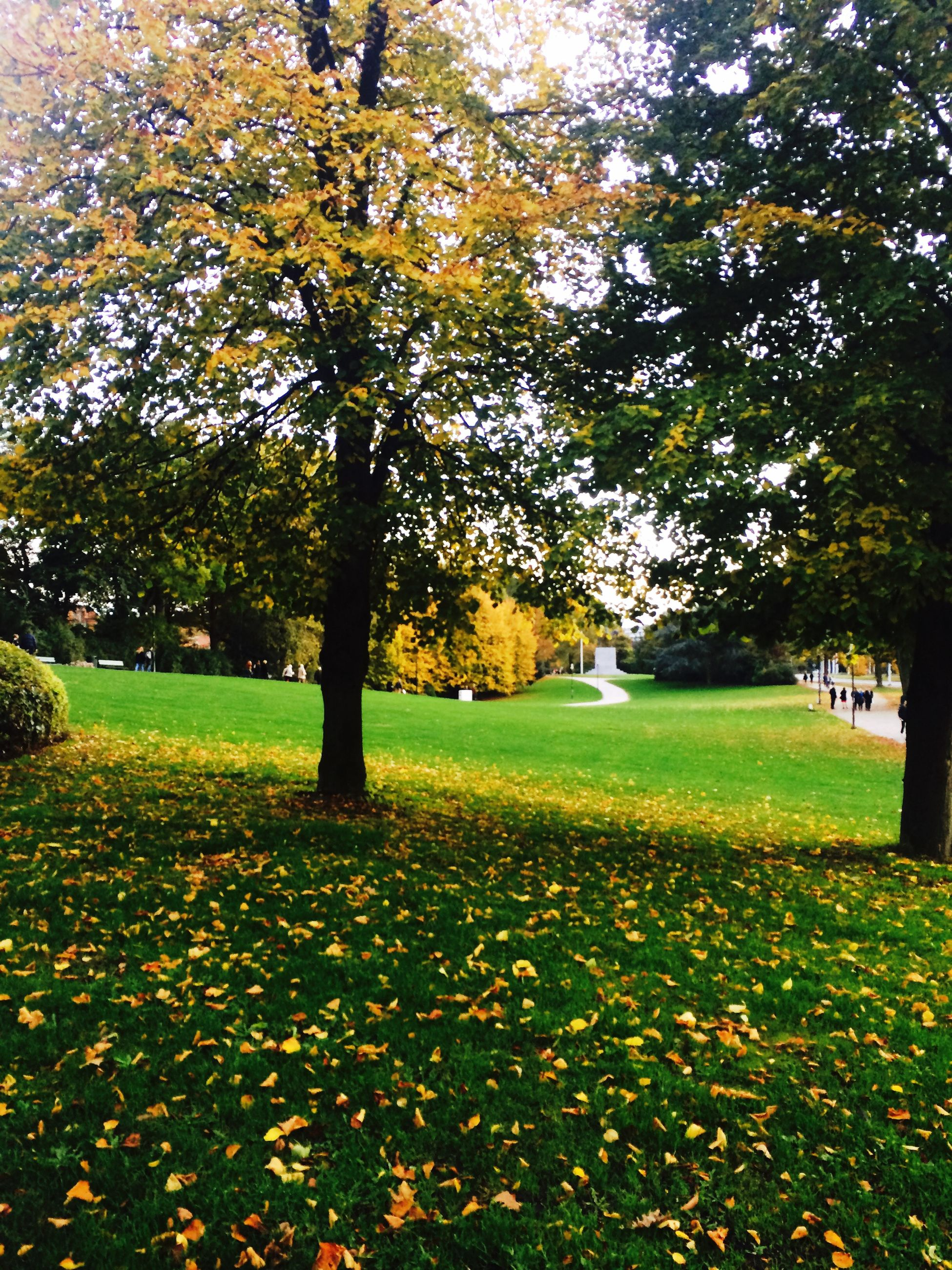 tree, autumn, change, season, growth, beauty in nature, tranquility, yellow, nature, park - man made space, leaf, tranquil scene, branch, park, field, scenics, grass, fallen, flower, sunlight