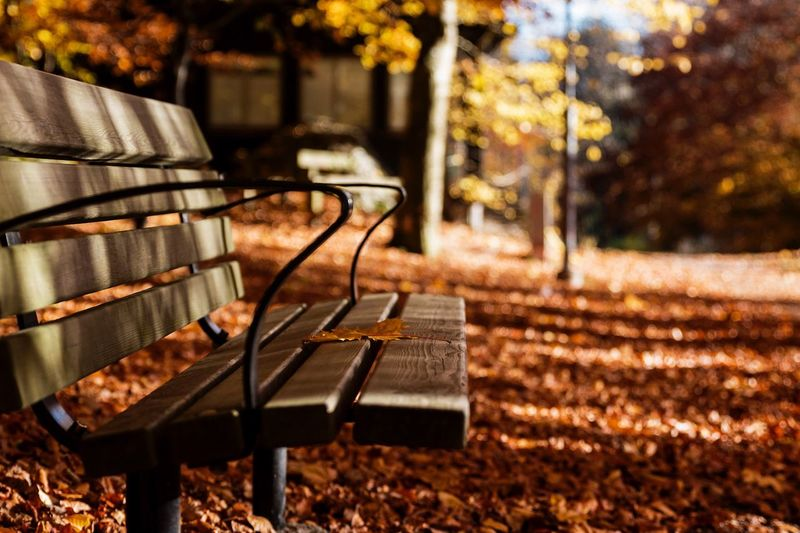 Wooden Bench At Park During Autumn