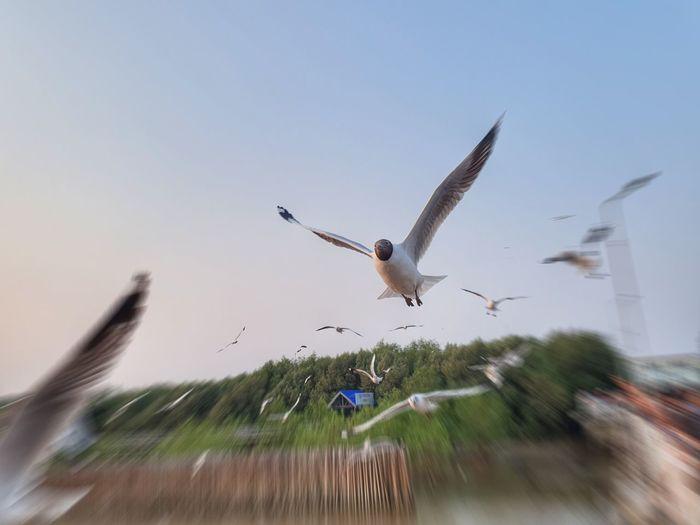 Bird Bird Of Prey Spread Wings Flying Motion Mid-air Sky