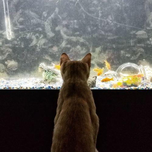 Paint The Town Yellow Water No People Indoors  Feline Mammal Domestic Animals Animal Themes Domestic Cat Pets One Animal Aquarium Fish EyeEm Selects Eye4photography  Tadaa Community