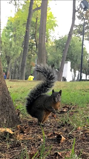 Squirrel 🐿 Tree Animal Themes Outdoors Domestic Animals One Animal No People Pets Mammal Day Nature Squirrel L4l Follow4follow Photographer IPhoneography Photography Beauty In Nature Animal Wildlife Like4like