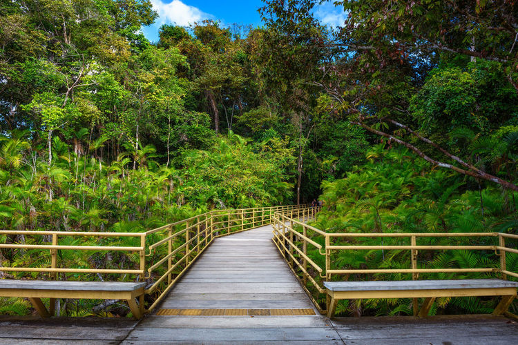 Footbridge amidst trees in forest
