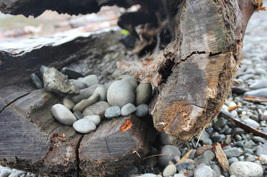Pebbles Log Hollow Log Vancouver Water Blue Sky Nature Blue Sea Blue Grey Grey Rock Rock Smooth Washed Up