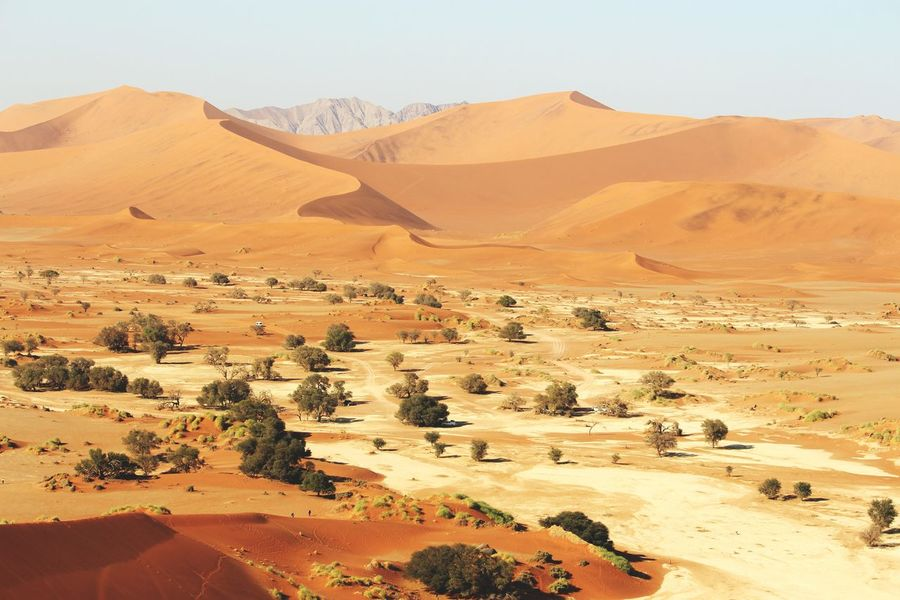 Namibia Landscape Namibia Africa Desert Photography Nature Photography Naturelovers Nature Colors Canon EOS 700D Eyemphotography Great View Dunes Experience Trees Sossusvlei Sossusvlei Desert Sossusvlei Desert - Namibia