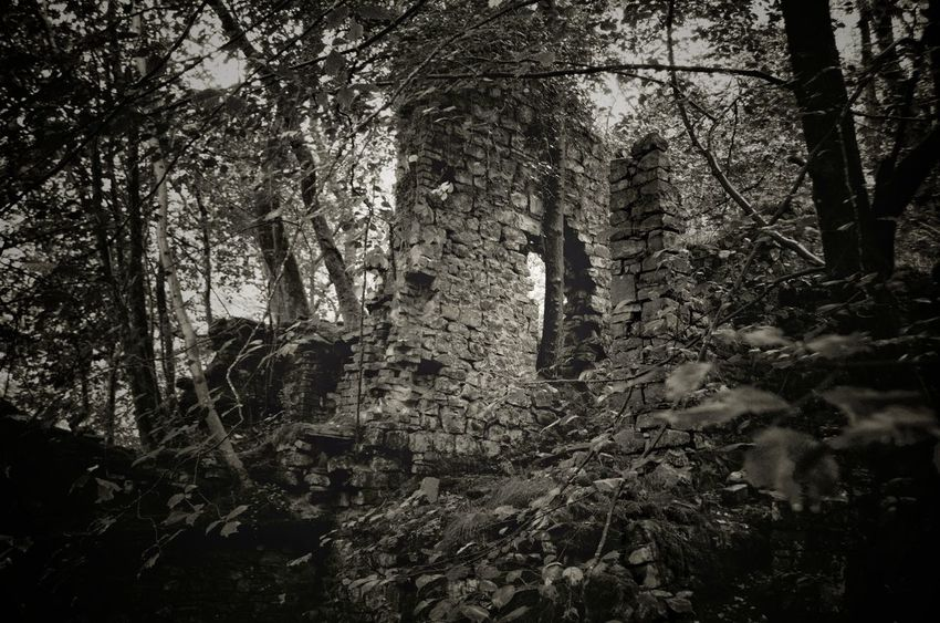 Abandoned Places Abandoned Forest WoodLand No People Low Angle View Outdoors Spooky Scenics Peace And Quiet Wales Peaceful Ruin Adventure Monochrome Hidden Places Tranquility Architecture Ruin