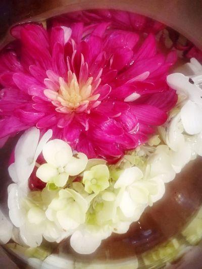 Flower Petal Freshness Pink Color Flower Head Indoors  Nature