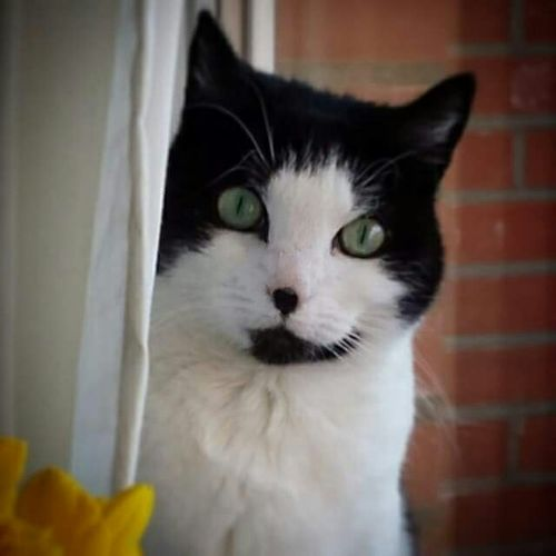 Showcase: December Cat Hi! Relaxing Enjoying Life Hello World Meeeaawww